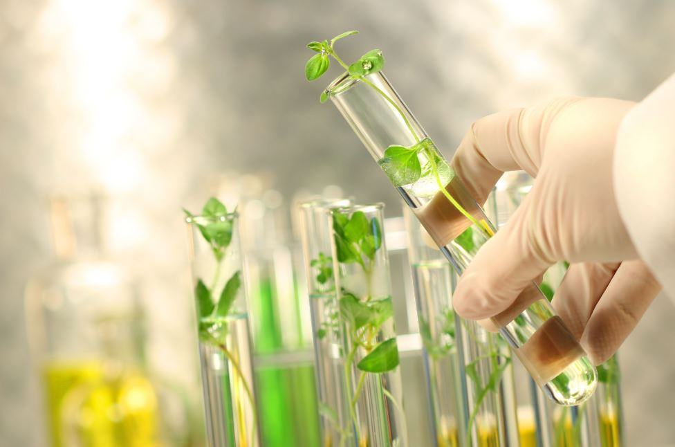 natural supplements testing quality